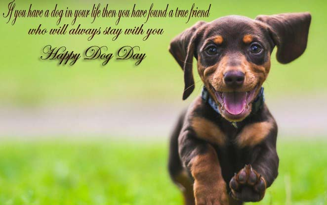 Happy National Dog Day 2019 Quotes, Messages, Wishes, Greetings, SMS, Text in Pictures