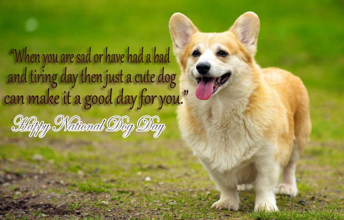 National Dog Day Messages, Greetings, Quotes, Wishes, Text, SMS in Pictures