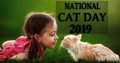 National Cat Day 2019 Wishes, Messages, Quotes, Greetings, Pic, Text, SMS, Images & Pictures