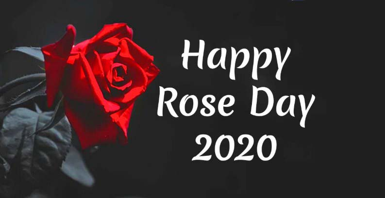 Happy Rose Day 2020 Wishes, Messages, Quotes, Greetings, Sayings & Status