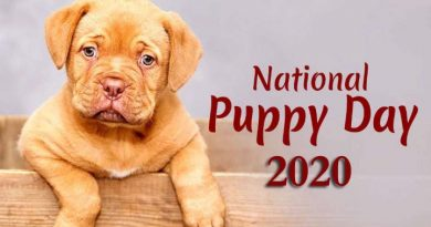 National Puppy Day 2020